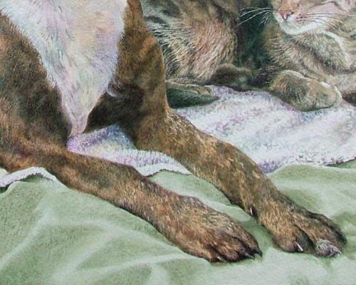 Lola and Tarzan (Dog & Cat Portrait)