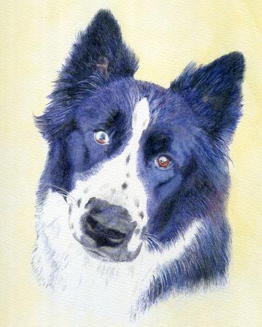 Maya Pet Portrait
