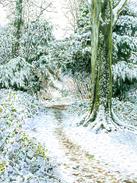 Snowy Woodland Walk on Box Hill